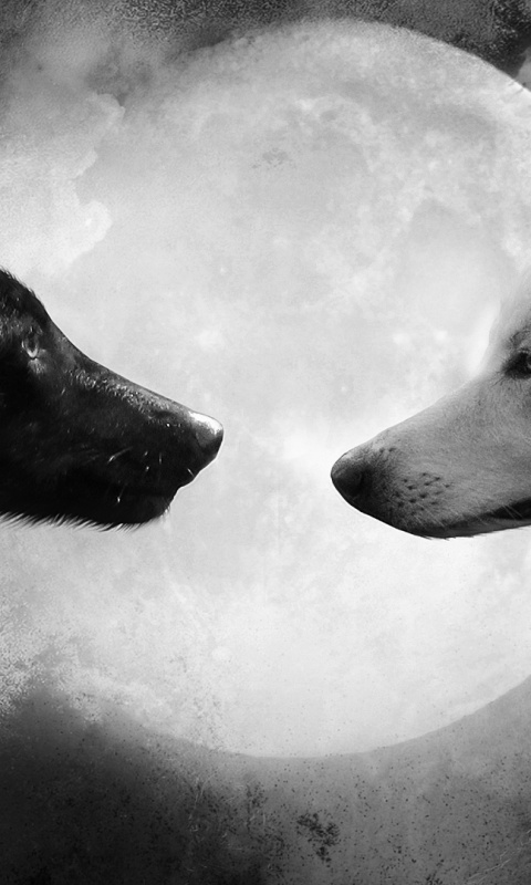 480x800 Black And White Wolf Cool Galaxy S2 Wallpaper