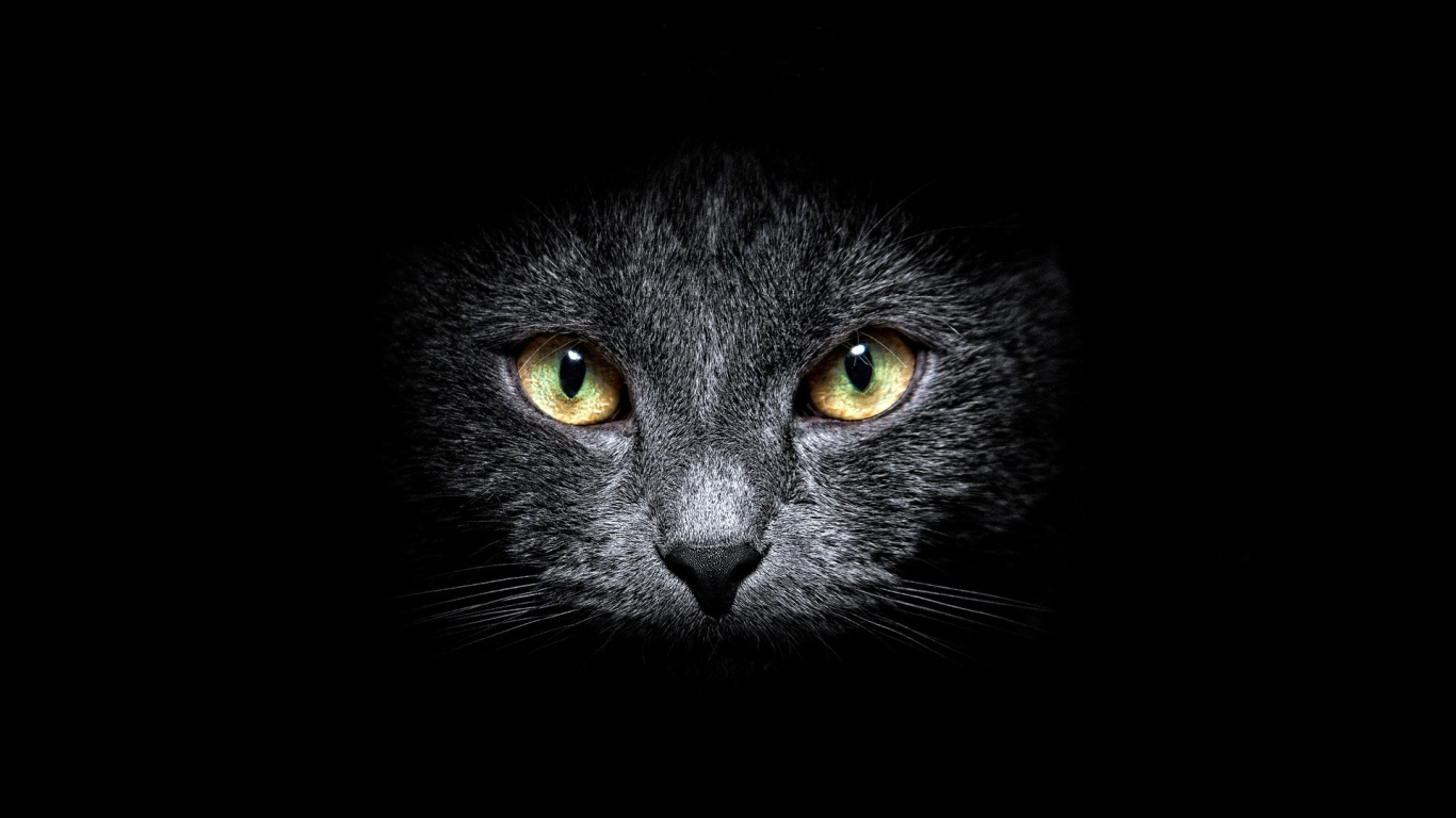 Black Cat Eyes Wallpaper: 1366x768 Black Cat In The Dark Desktop PC And Mac Wallpaper