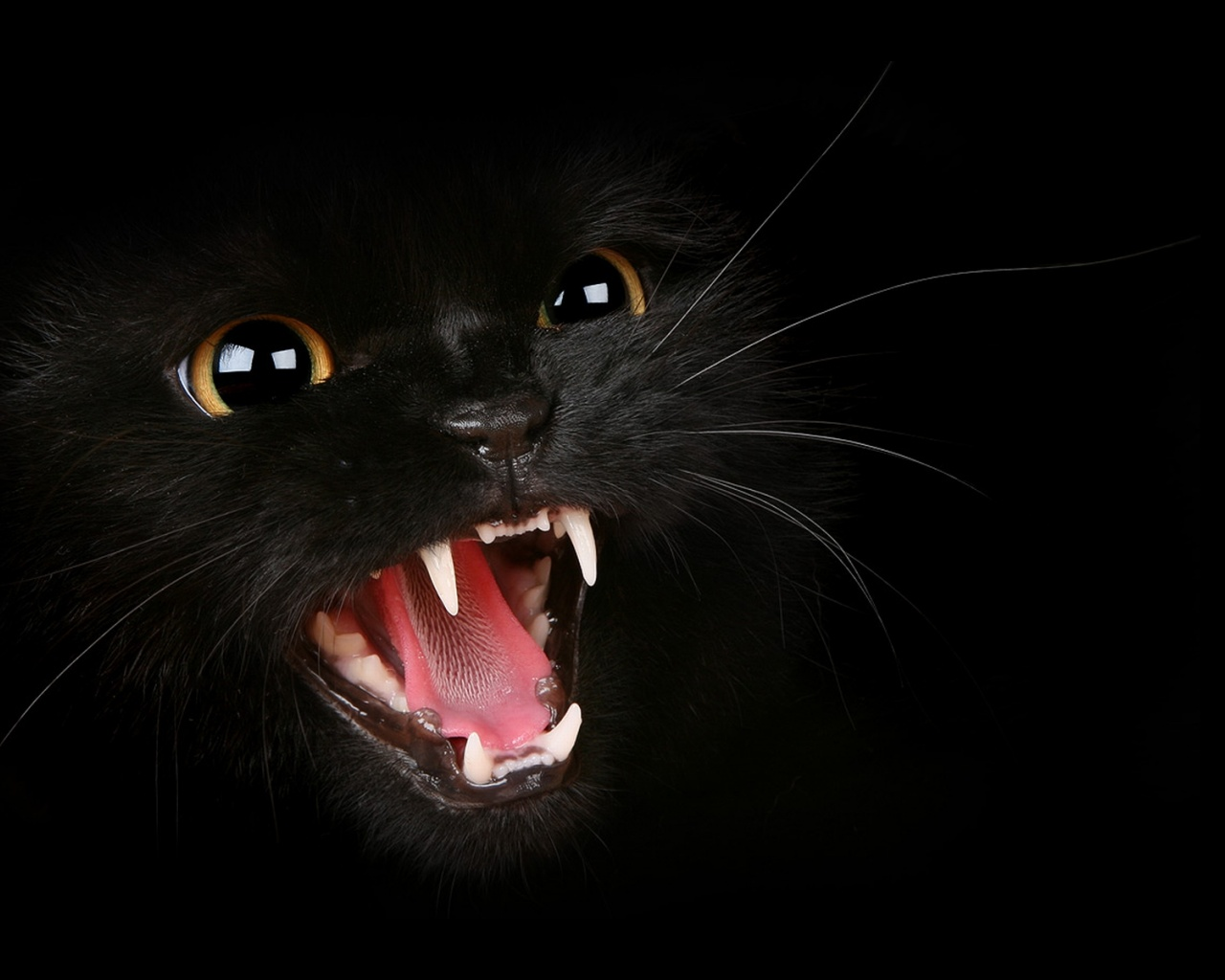 Black Wallpaper Cat Wallpapers Free Photos Images Pictures