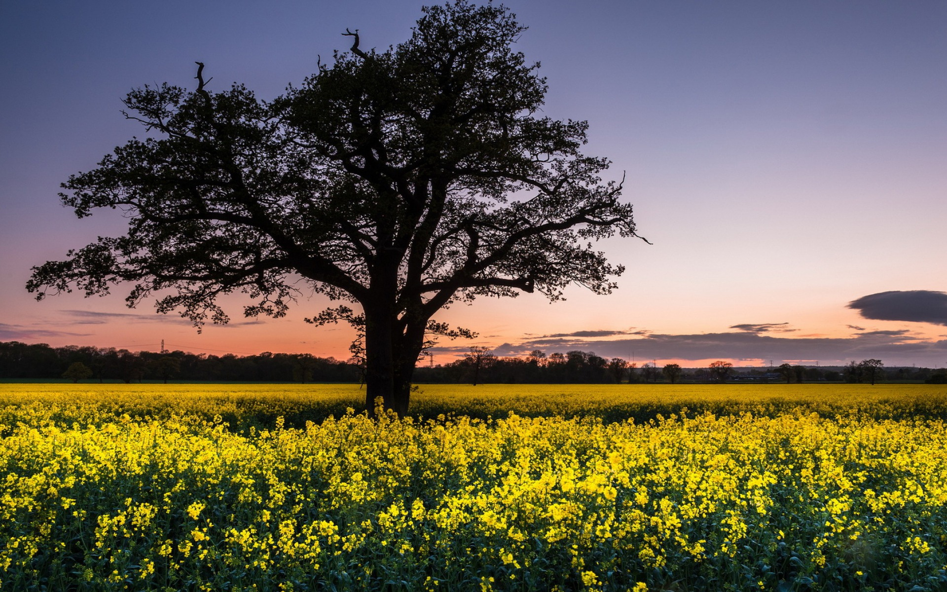 Image  Black Tree  amp  Yellow Flowers wallpapers and stock photosYellow Black Flowers Wallpaper