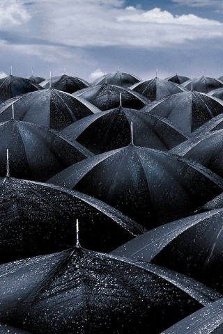 320x480 Black umbrellas