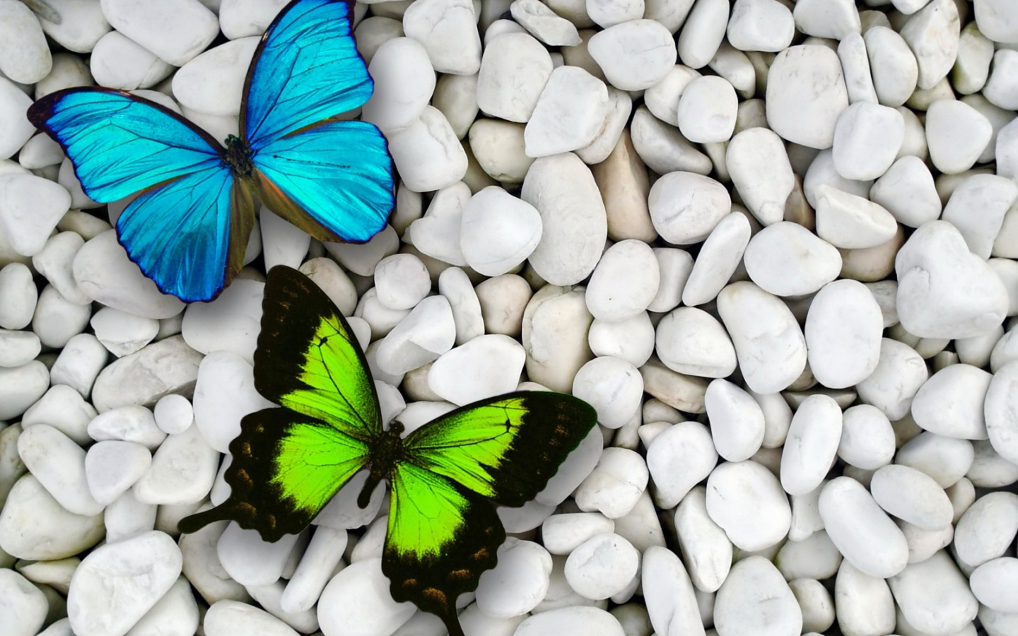 1440x900 Blue amp; Green Butterfly desktop PC and Mac wallpaper
