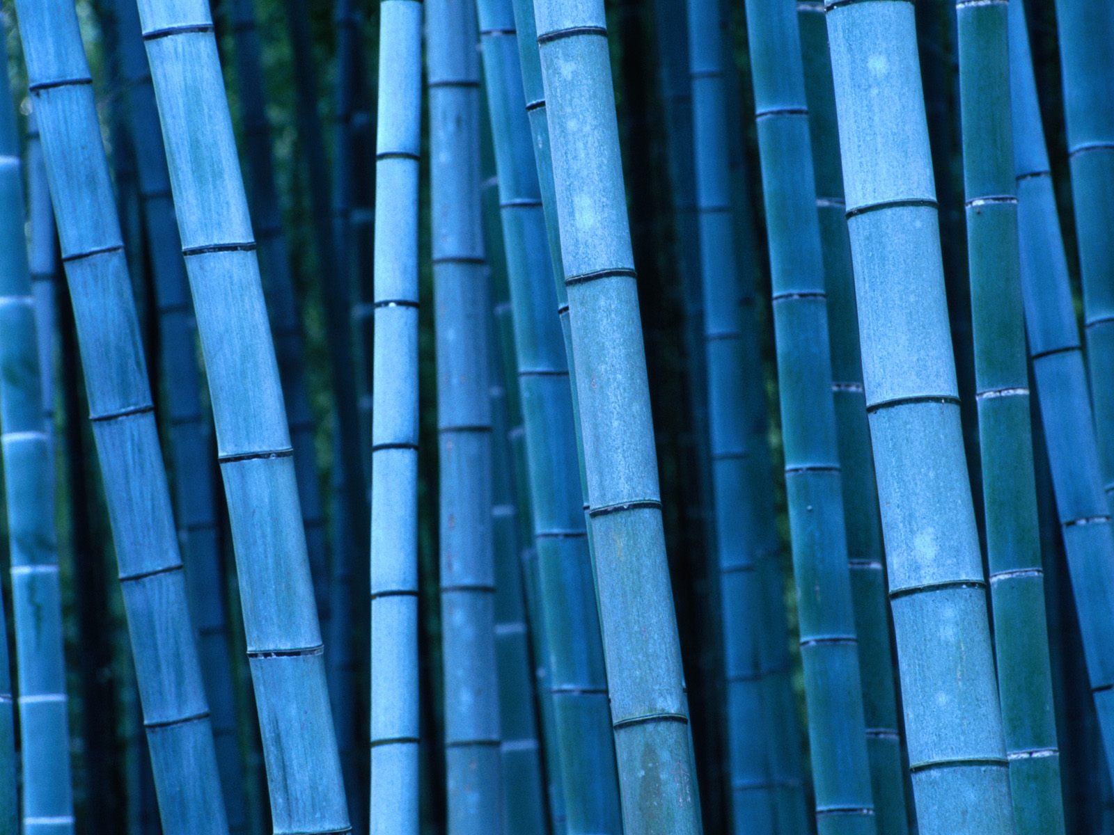 1600x1200 Blue bamboo desktop wallpapers and stock photos
