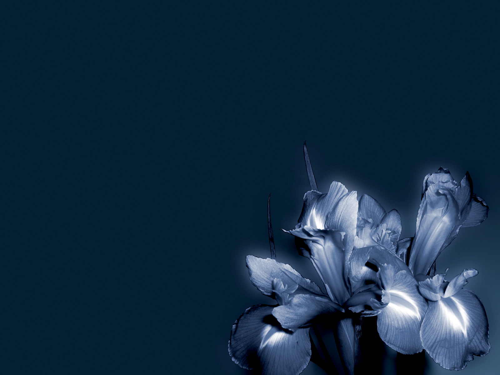 Blue Flower Wallpapers Blue Flower Stock Photos