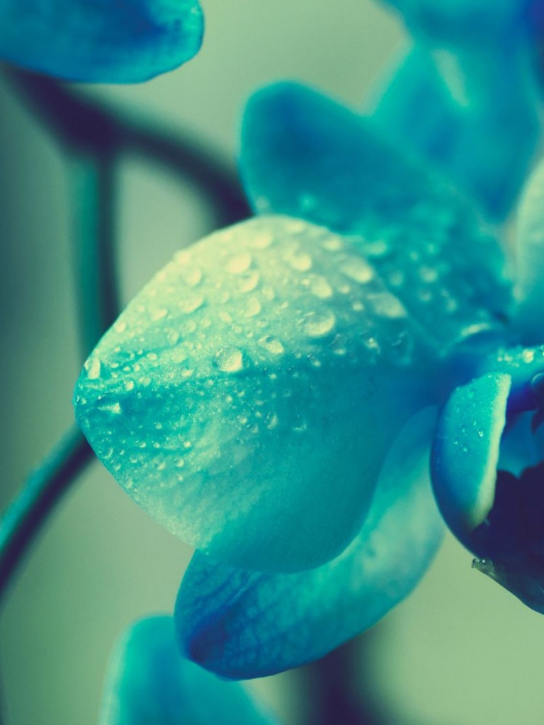 macro blue flower wallpaper - photo #39