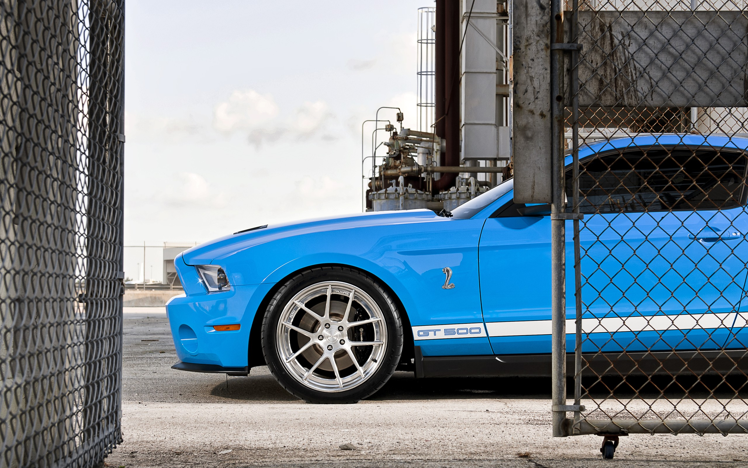 2560x1440 blue ford mustang shelby gt500 youtube channel cover