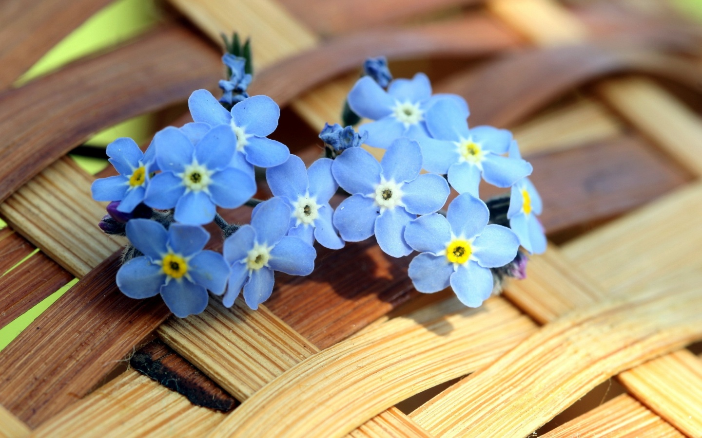 1440x900 Blue Forget-me-not Flowers