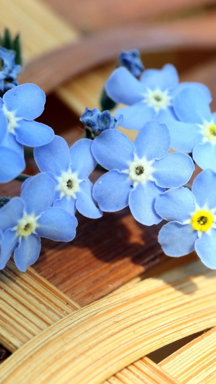 720x1280 Blue Forget-me-not Flowers
