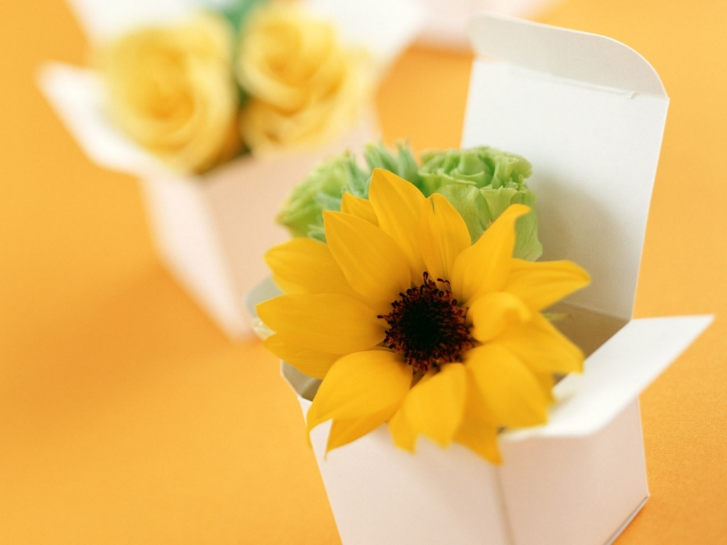 1024x768 Boxed sunflower desktop wallpapers and stock photos