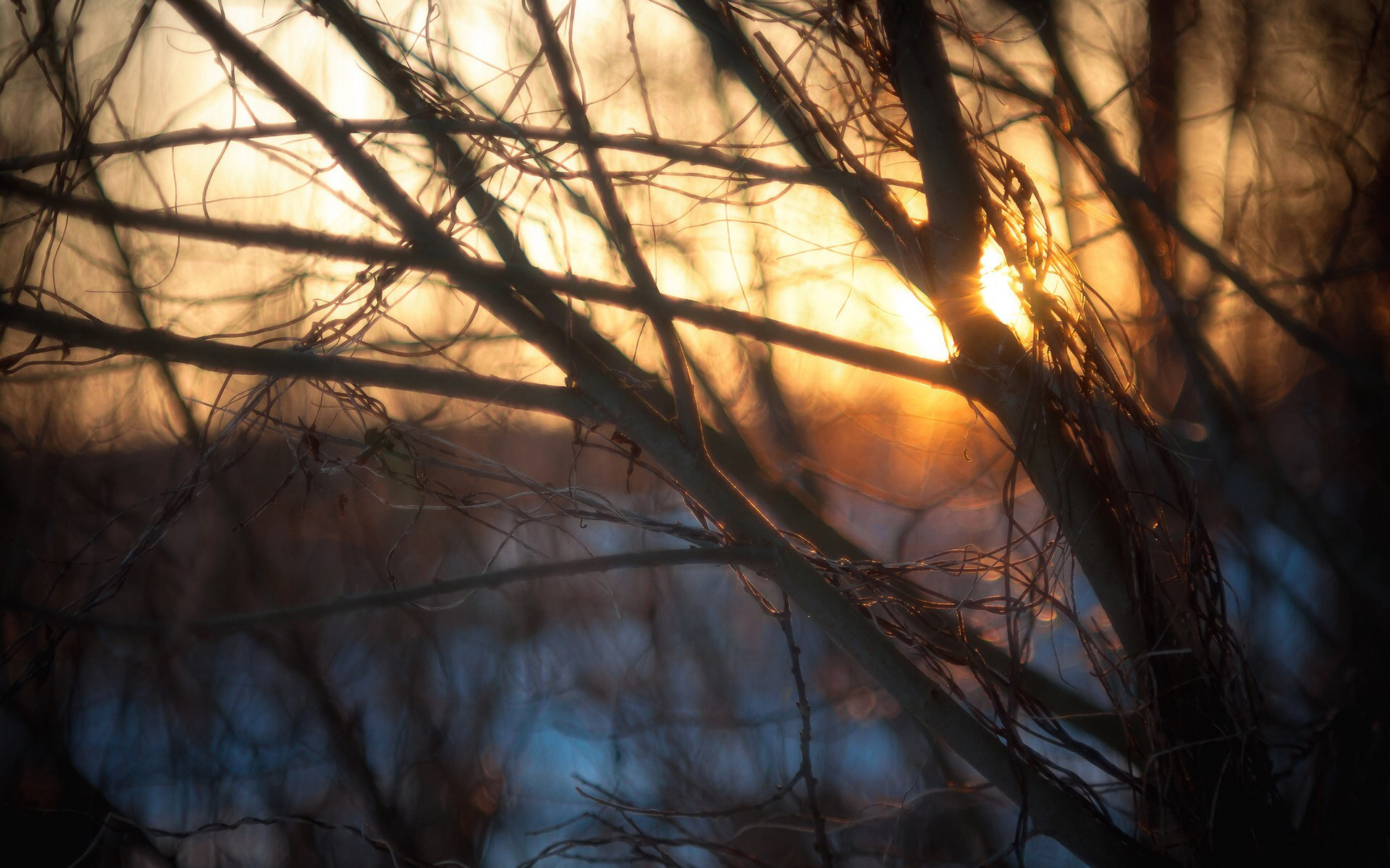 Branches Amp Winter Light Wallpapers Branches Amp Winter