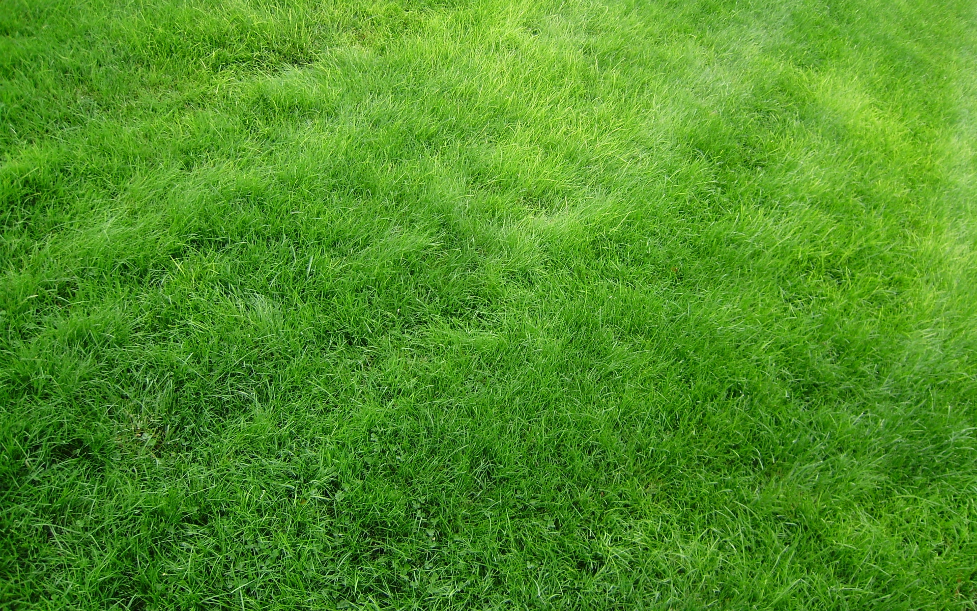 Bright Green Grass Wallpapers Bright Green Grass Stock
