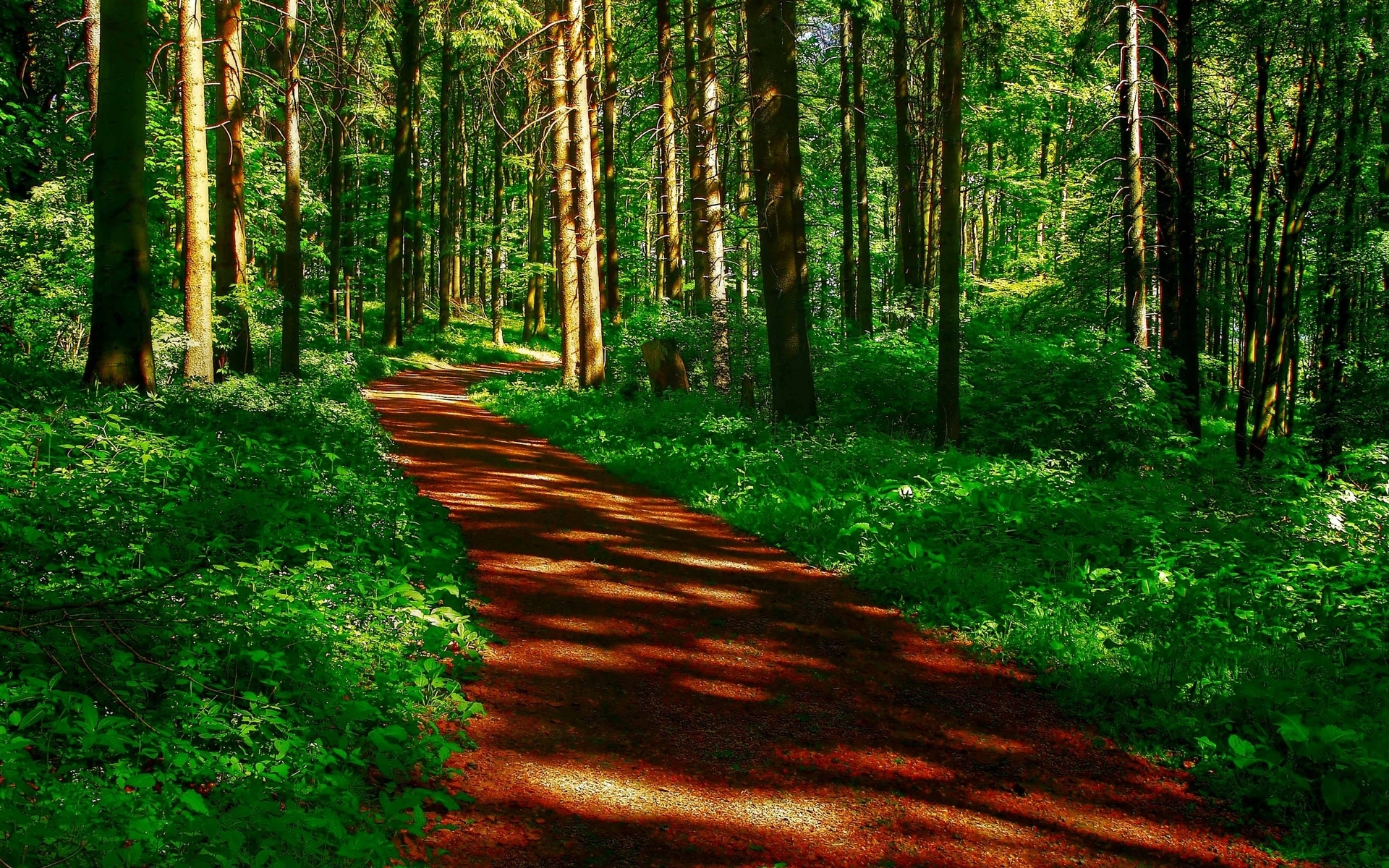 Brown Path Green Plants Wood Wallpapers