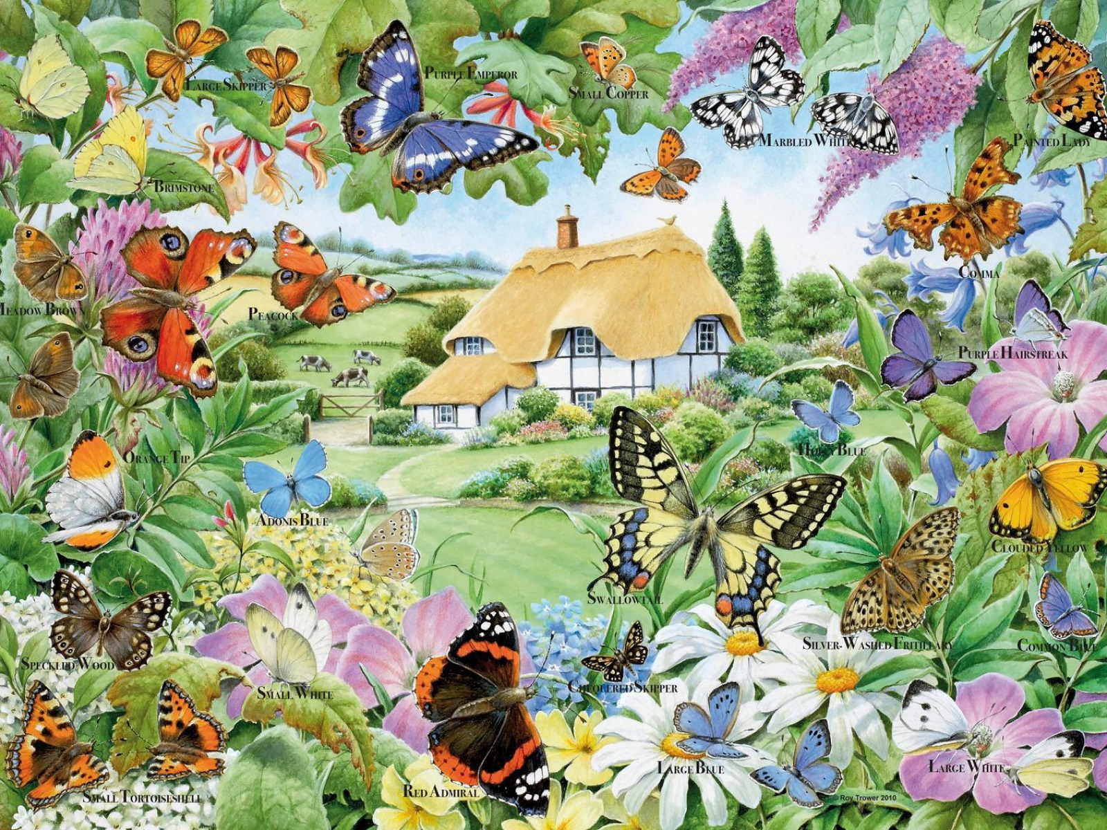 butterfly family garden wallpapers butterfly family