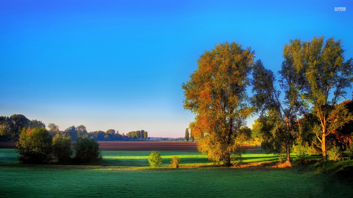 1366x768 calico trees & relaxing fields desktop pc and mac wallpaper