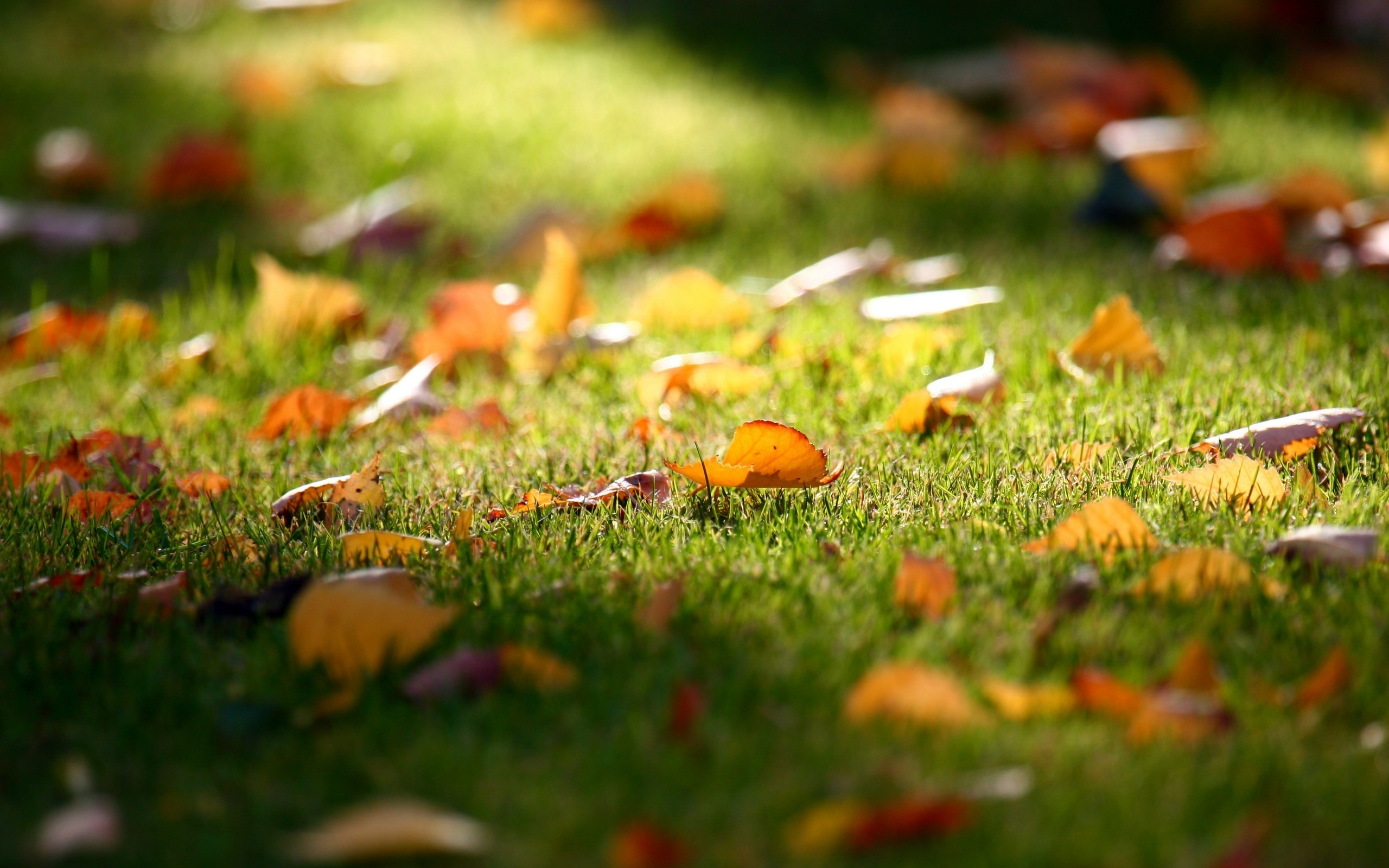 Download Wallpaper Leaves Earth Autumn Carpet Red HD Background