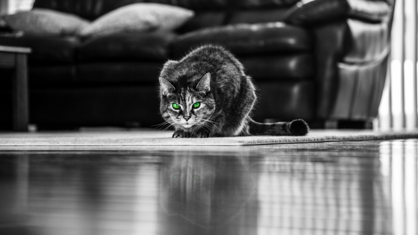 852x480 cat, green-eyed, bw