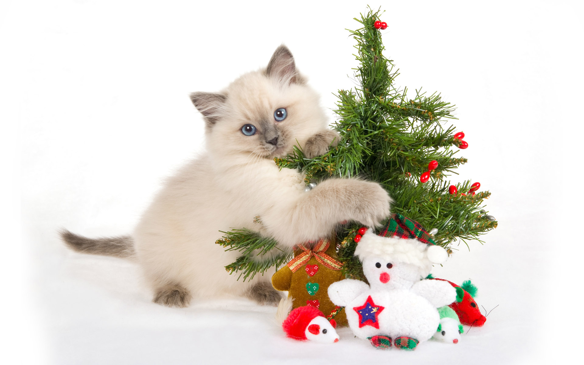 1920x1200 Cat with Christmas tree desktop PC and Mac wallpaper
