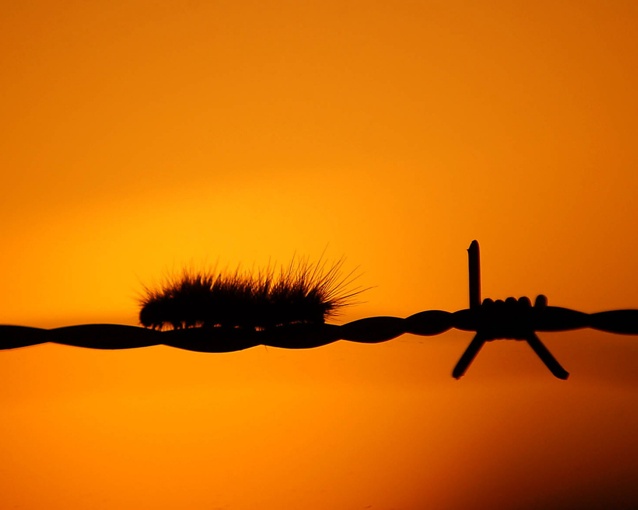 1280x1024 Caterpillar On Fence Desktop Pc And Mac Wallpaper