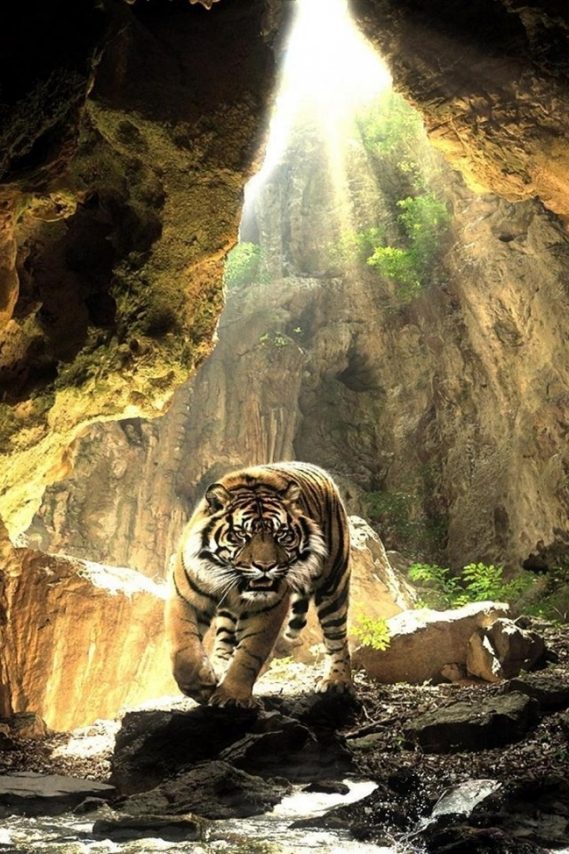 640x960 Cave Wild Tiger Water Light Iphone 4 Wallpaper