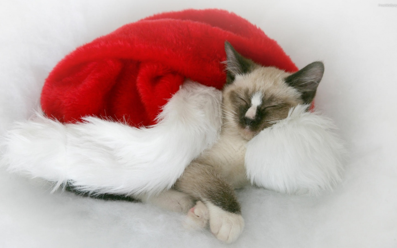 1280x800 Christmas Cat, decoration