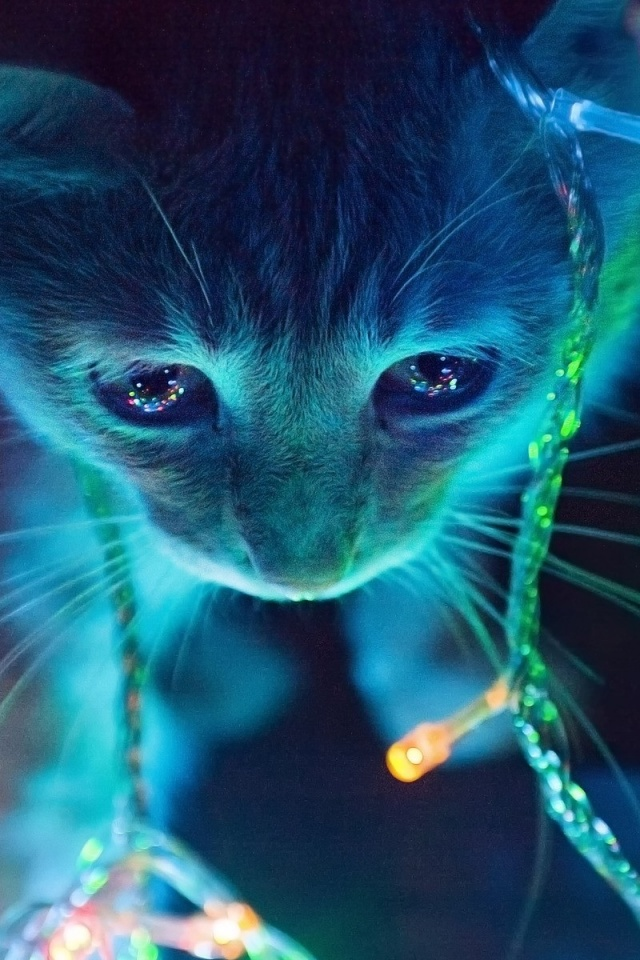 640x960 christmas lights cat iphone 4 wallpaper