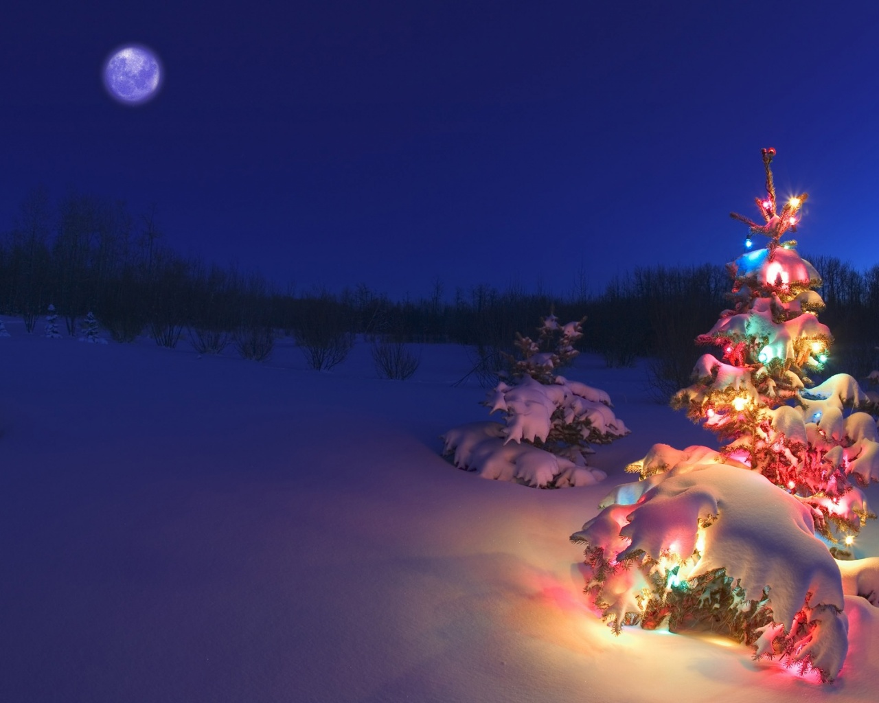 Christmas Tree In The Snow Wallpapers