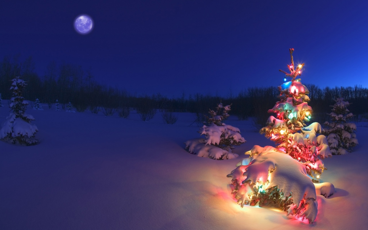 1280x800 Christmas tree in the snow desktop PC and Mac wallpaper