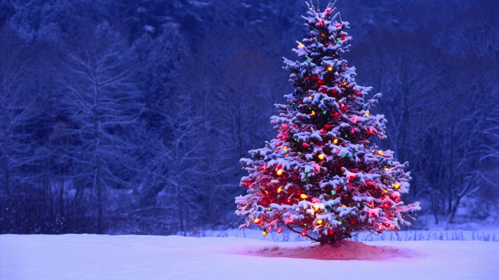 1680x1050 Christmas Tree desktop PC and Mac wallpaper