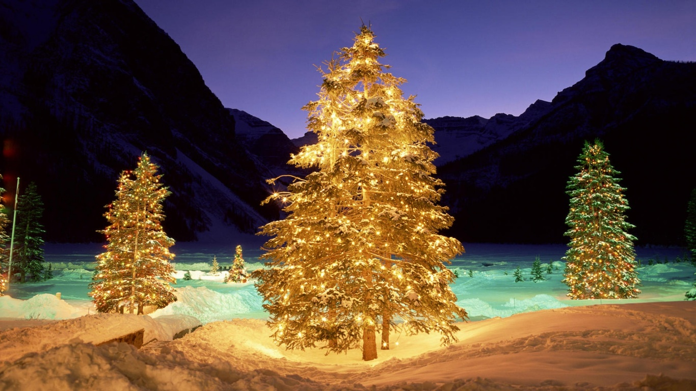 1366x768 Christmas Trees In The Wild Desktop Pc And Mac Wallpaper