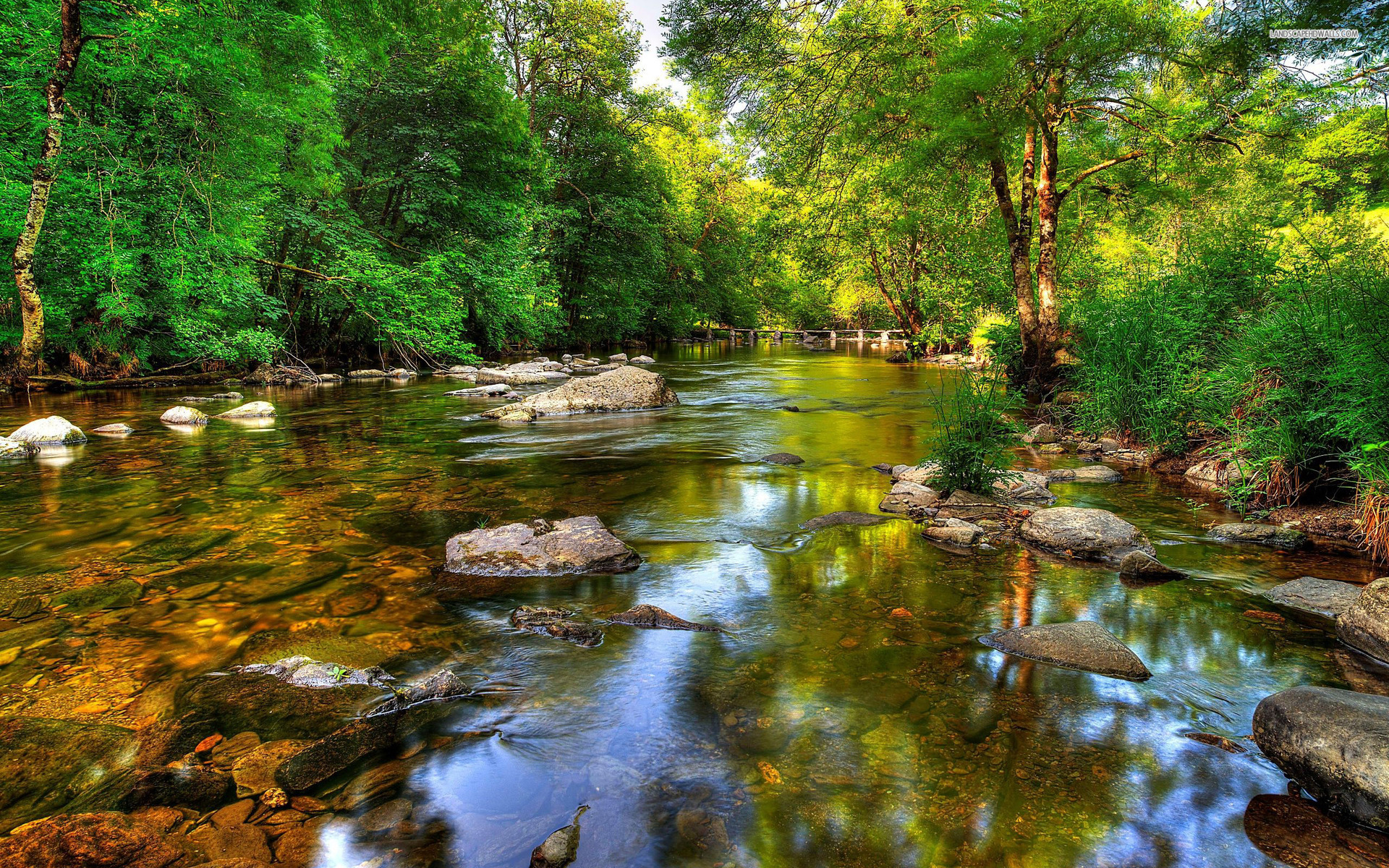 forest river wide hd - photo #7