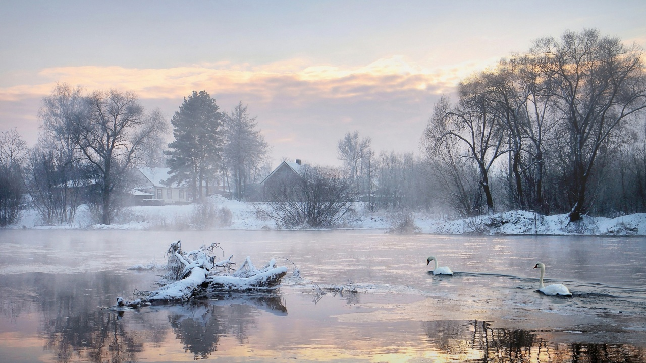 1280x720 Cold Lake Swans Trees Houses