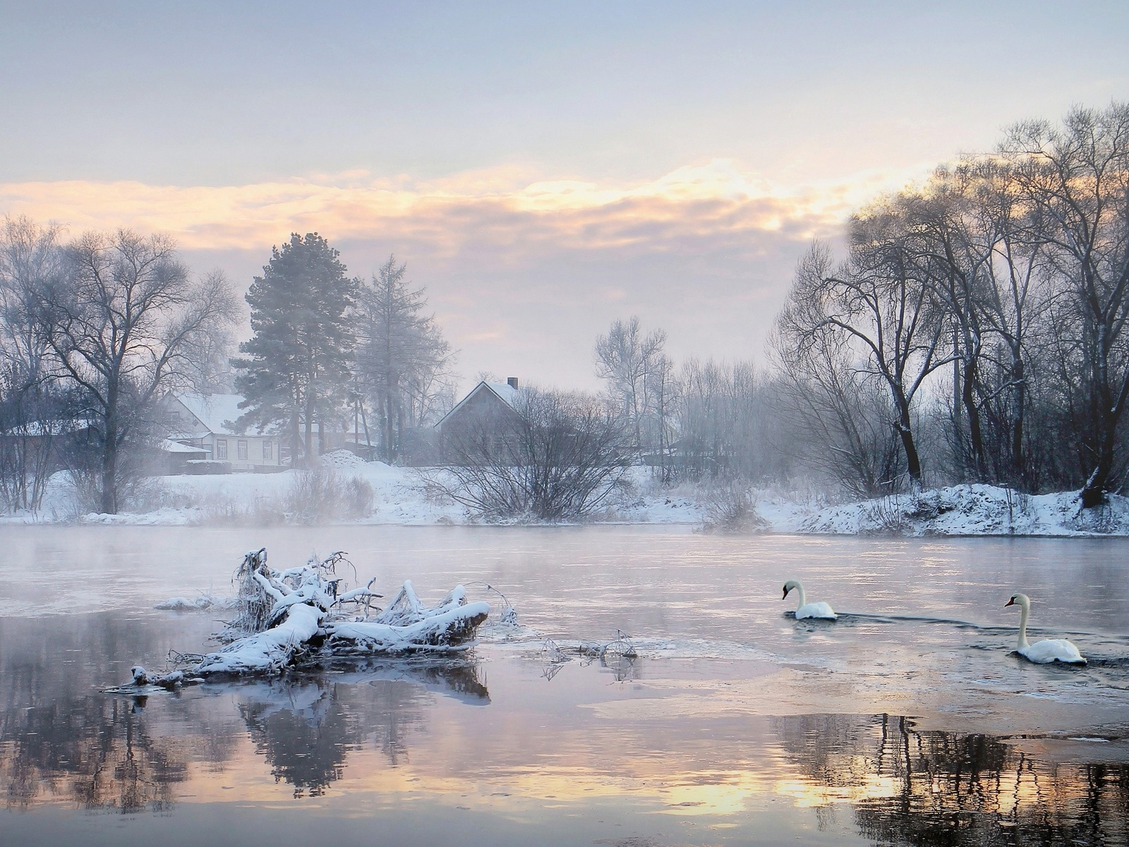 1500x500 Cold Lake Swans Trees Houses