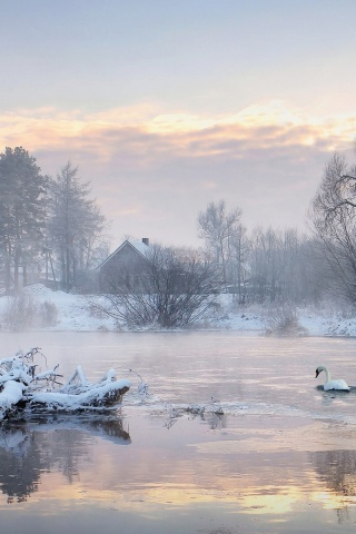 320x480 Cold Lake Swans Trees Houses