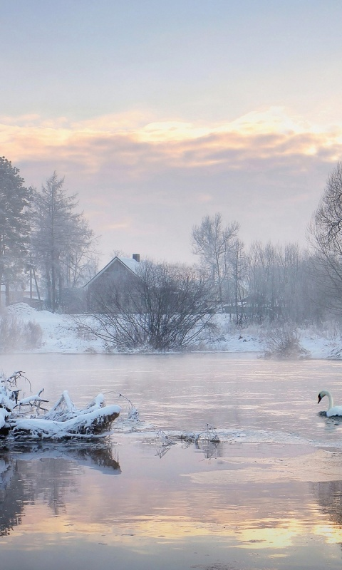 480x800 Cold Lake Swans Trees Houses