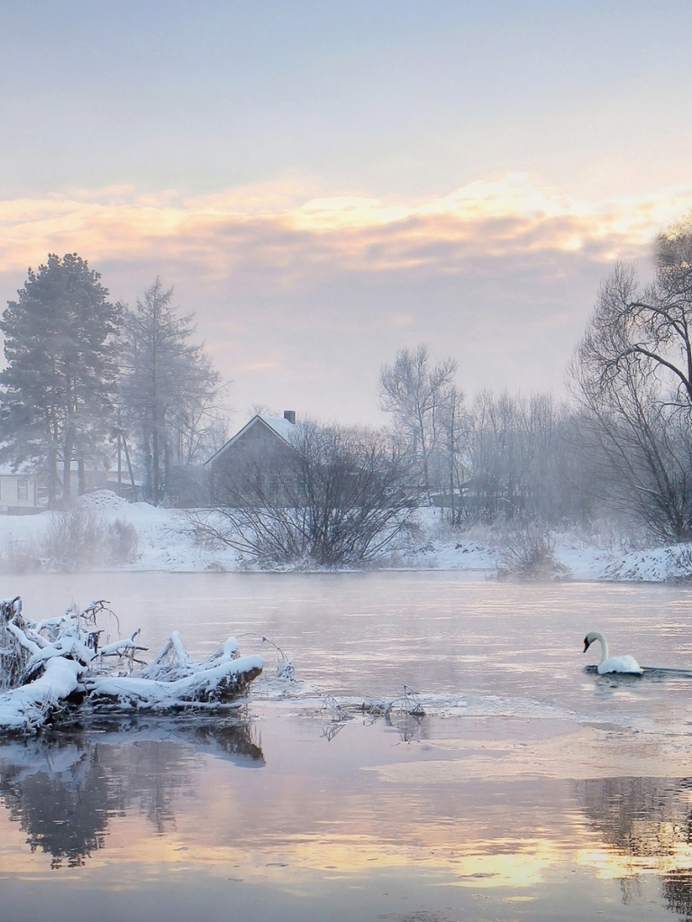 768x1024 Cold Lake Swans Trees Houses
