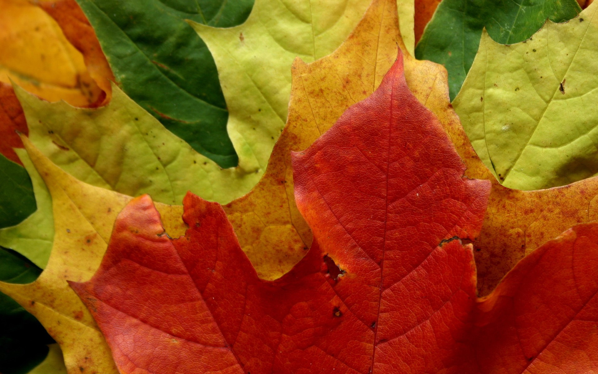 Image Colorful Autumn Leaves Wallpapers And Stock Photos