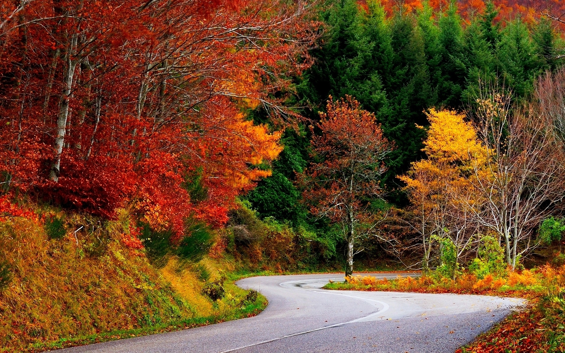 Colorful Autumn Trees Amp Street Wallpapers Colorful