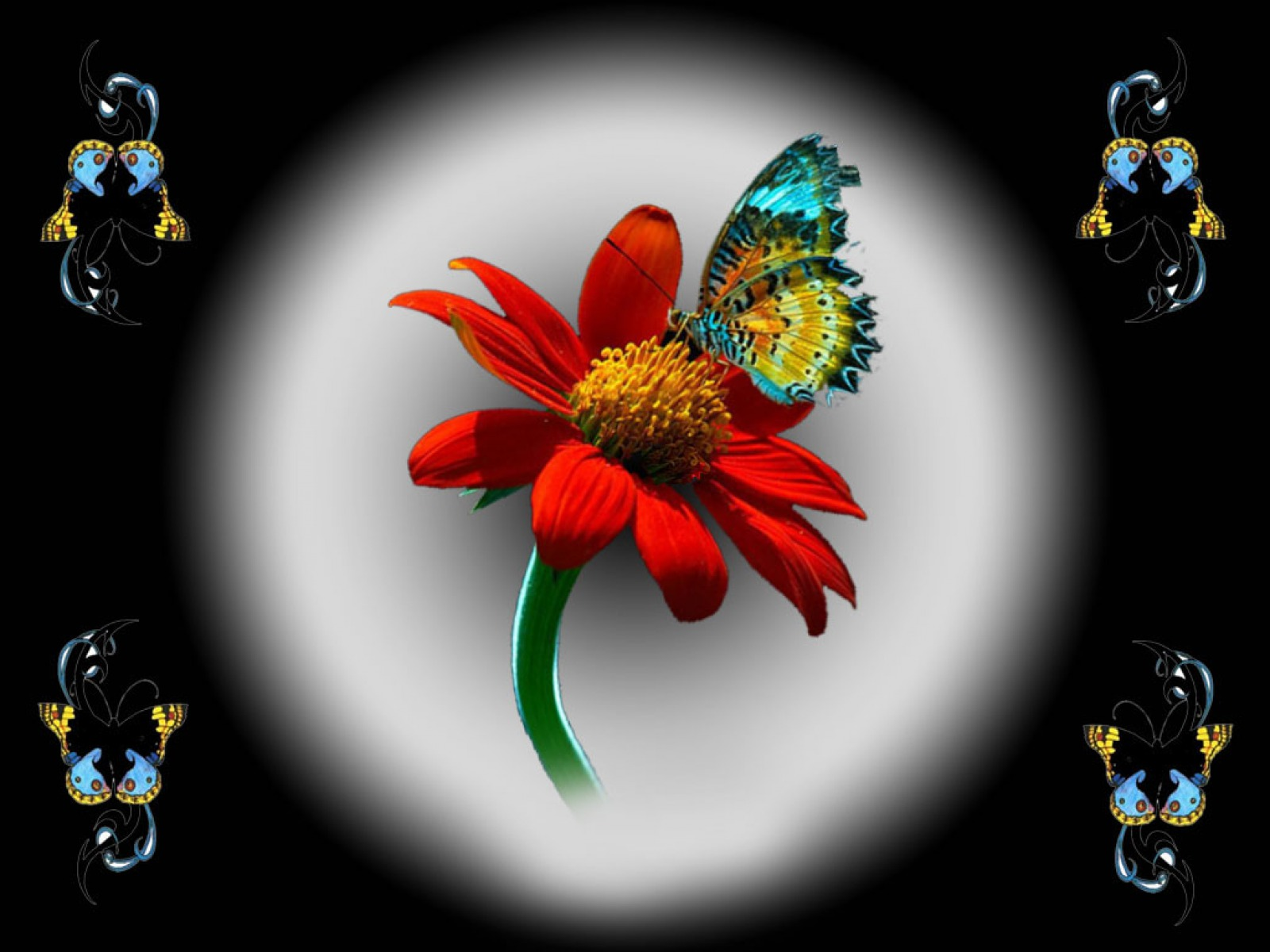 Colorful Butterfly Red Flower Wallpapers Colorful