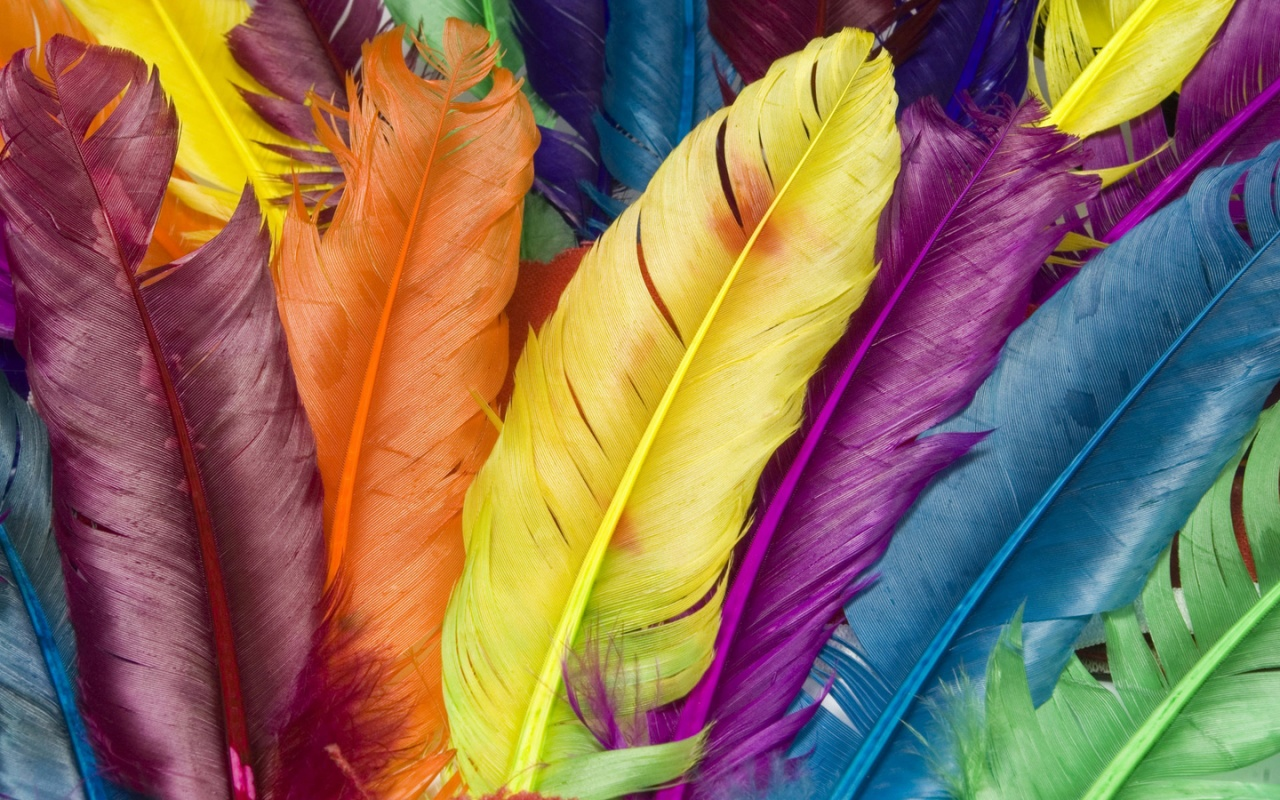 1280x800 Colorful feathers