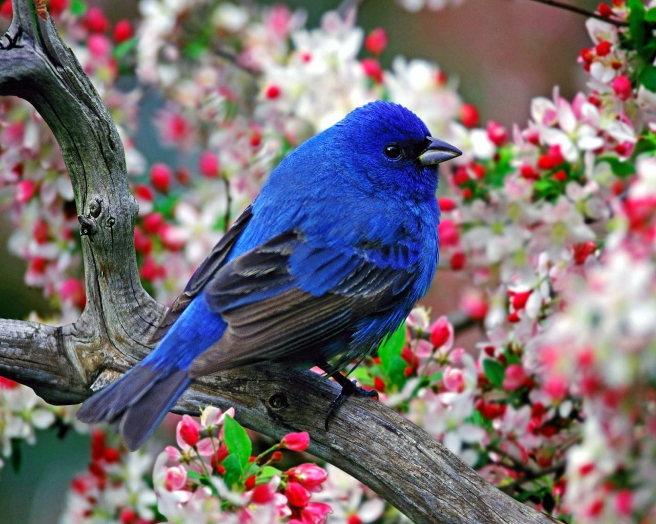 1280x1024 Colorful little bird desktop PC and Mac wallpaper