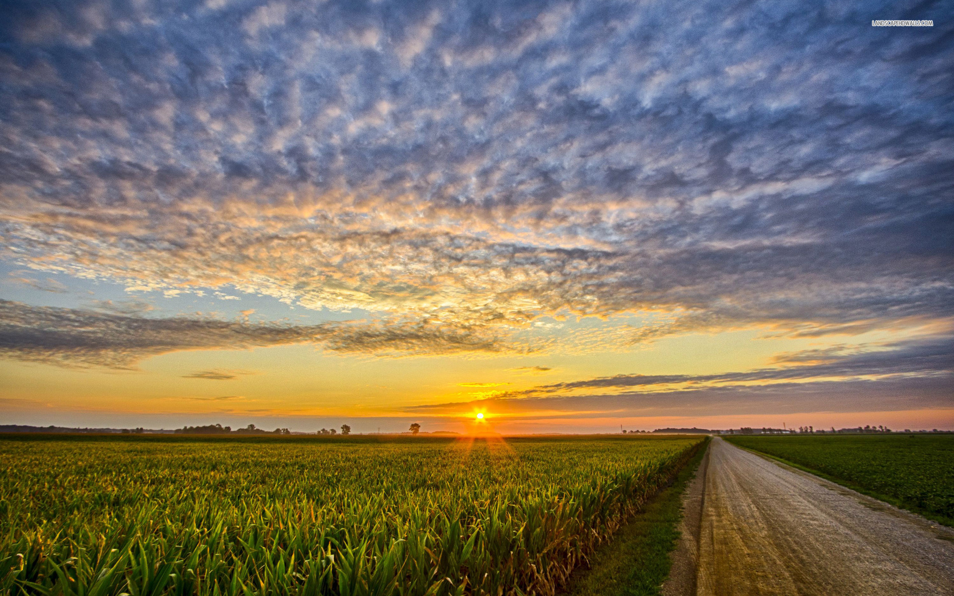 Corn Field Road Clouds Sunset wallpapers | Corn Field Road ...