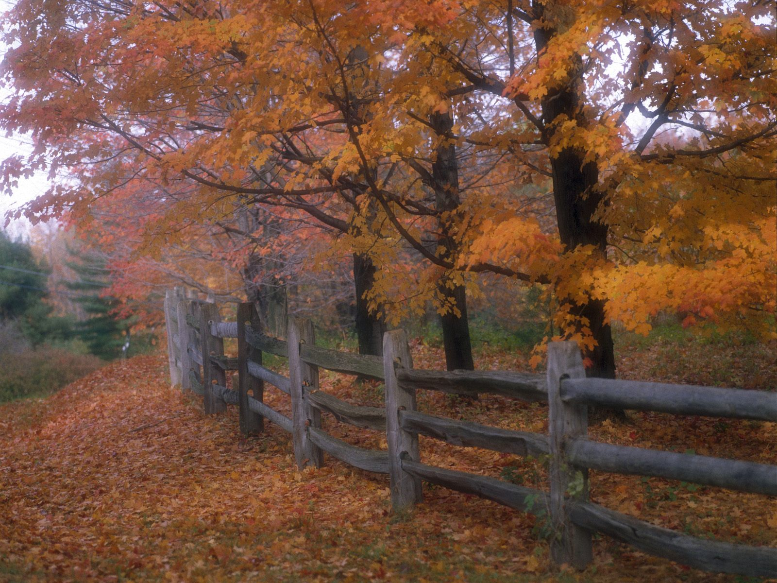 1600x1200 Country fence desktop PC and Mac wallpaper