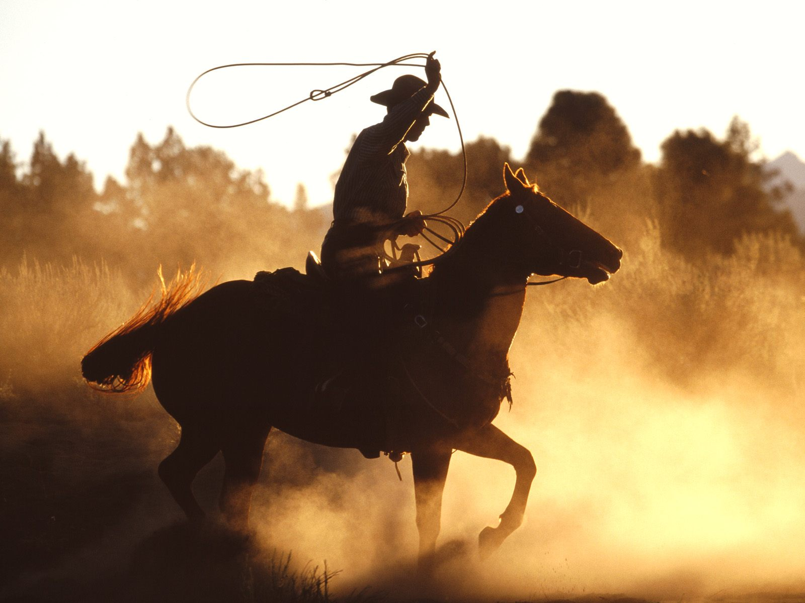 1600x1200 Cowboy with lasso desktop wallpapers and stock photos