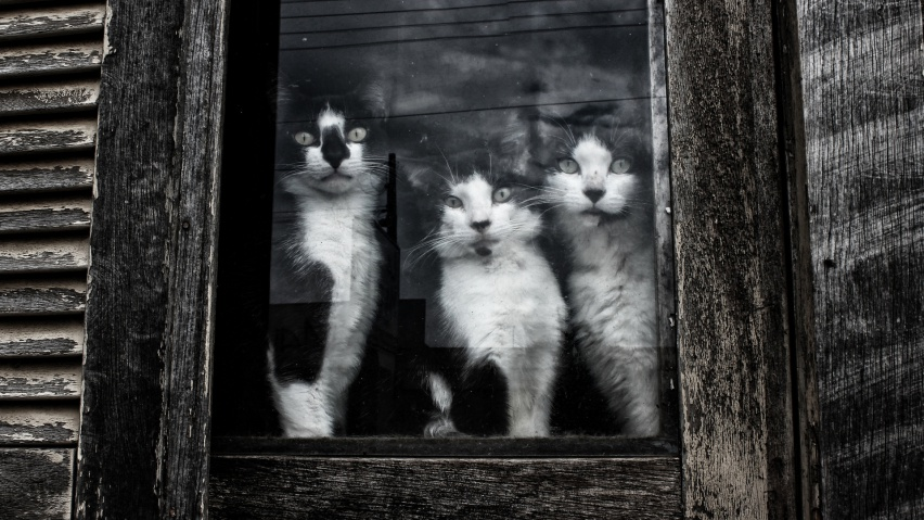 646x220 Curious Black And White Kittens Linkedin Banner Image