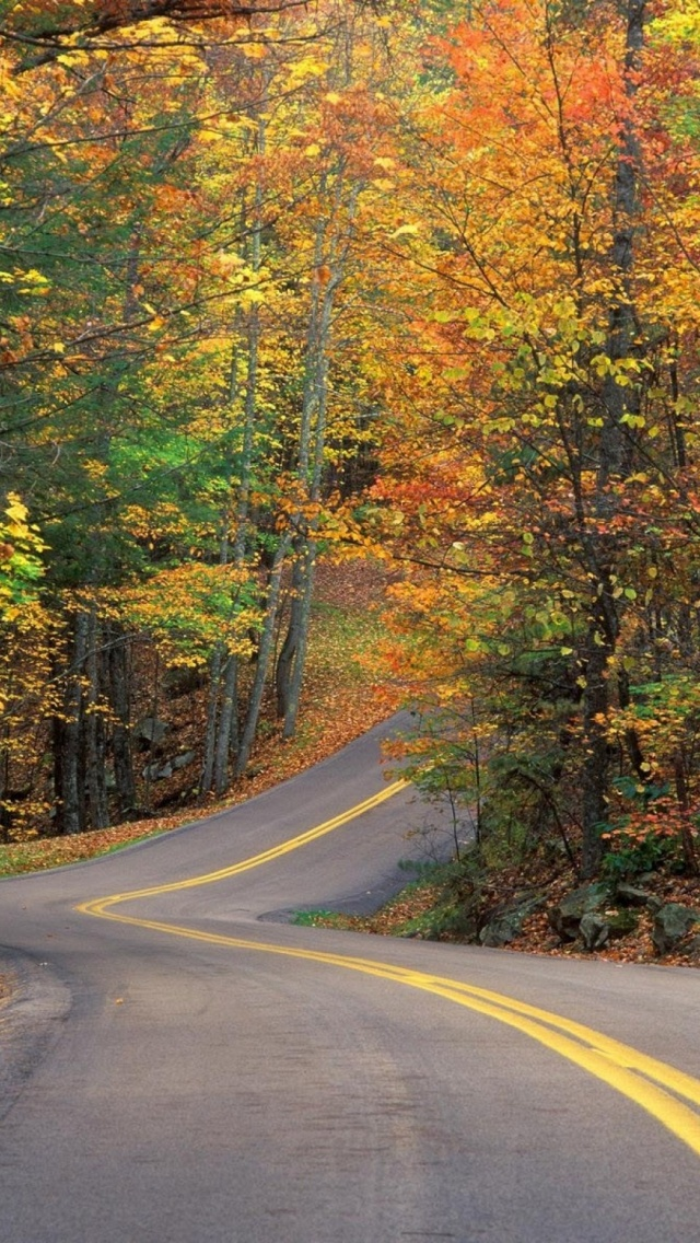 640x1136 Curvy Autumn Road Forest Iphone 5 Wallpaper