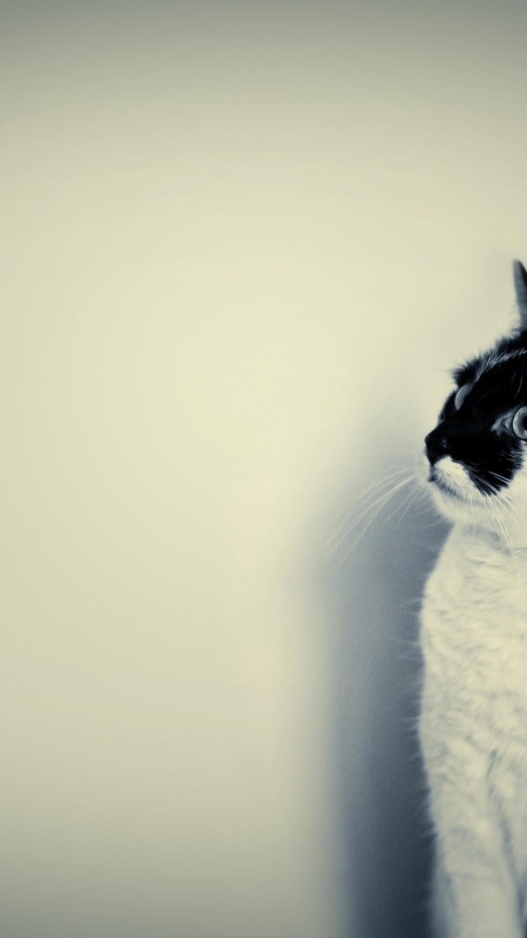768x1366 cute black and white cat surface rt wallpaper