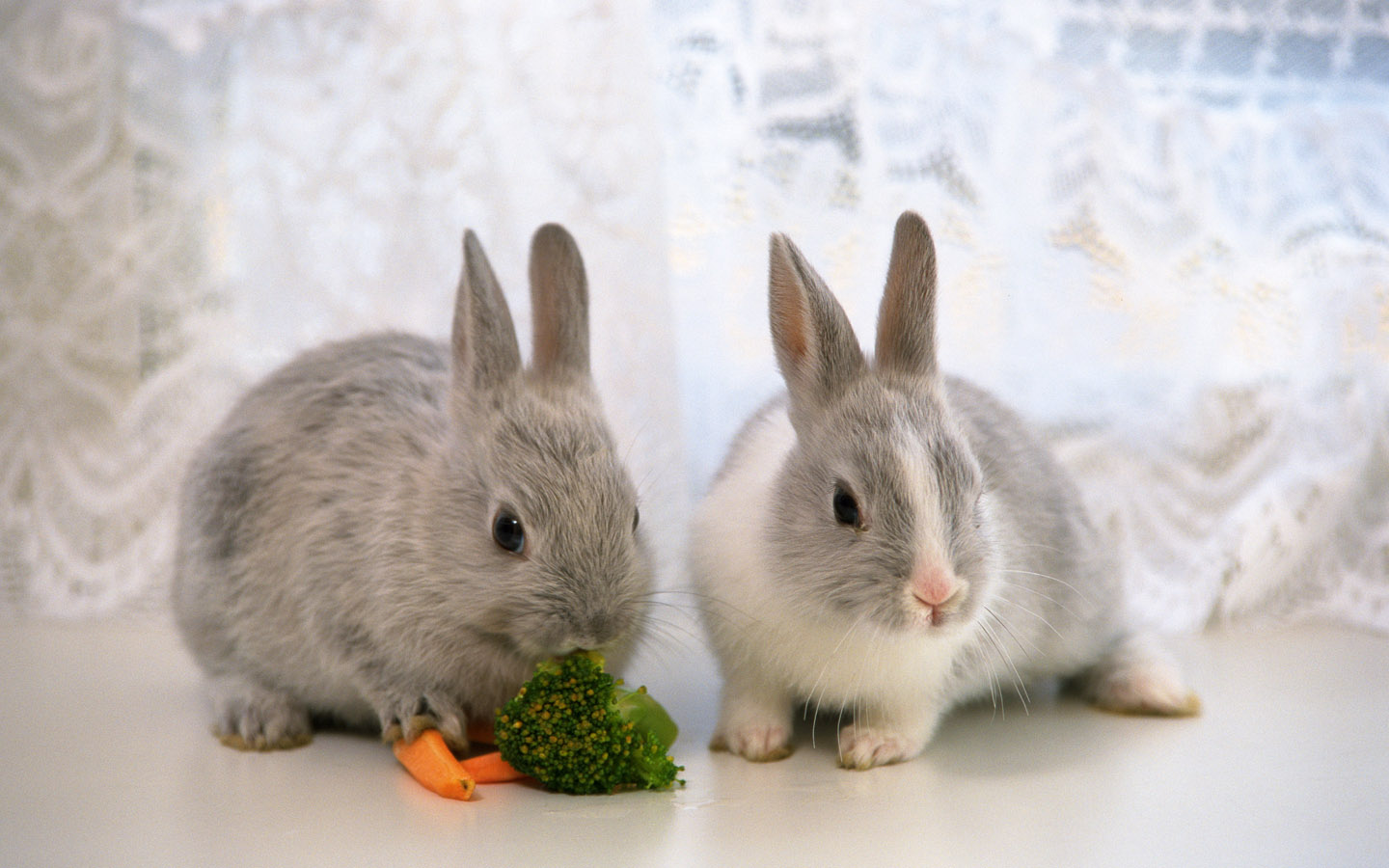 Download 1440x900 Two Cute Rabbits Wallpaper