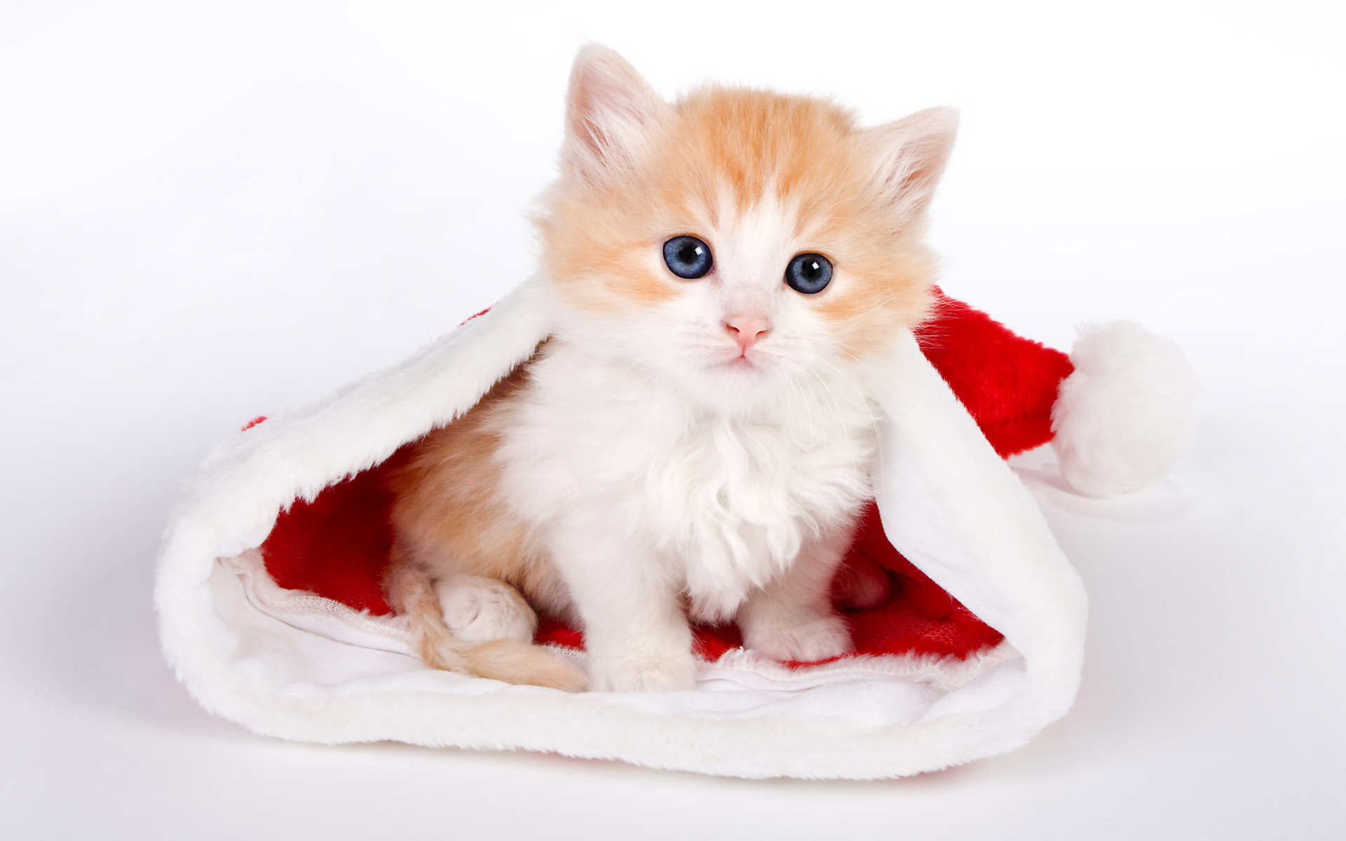 1920x1200 Cute cat in Santa hat desktop wallpapers and stock photos