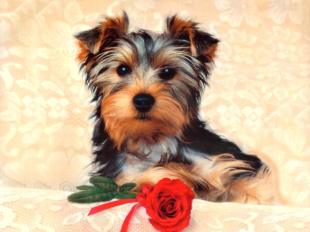 1024x768 cute dog desktop pc and mac wallpaper