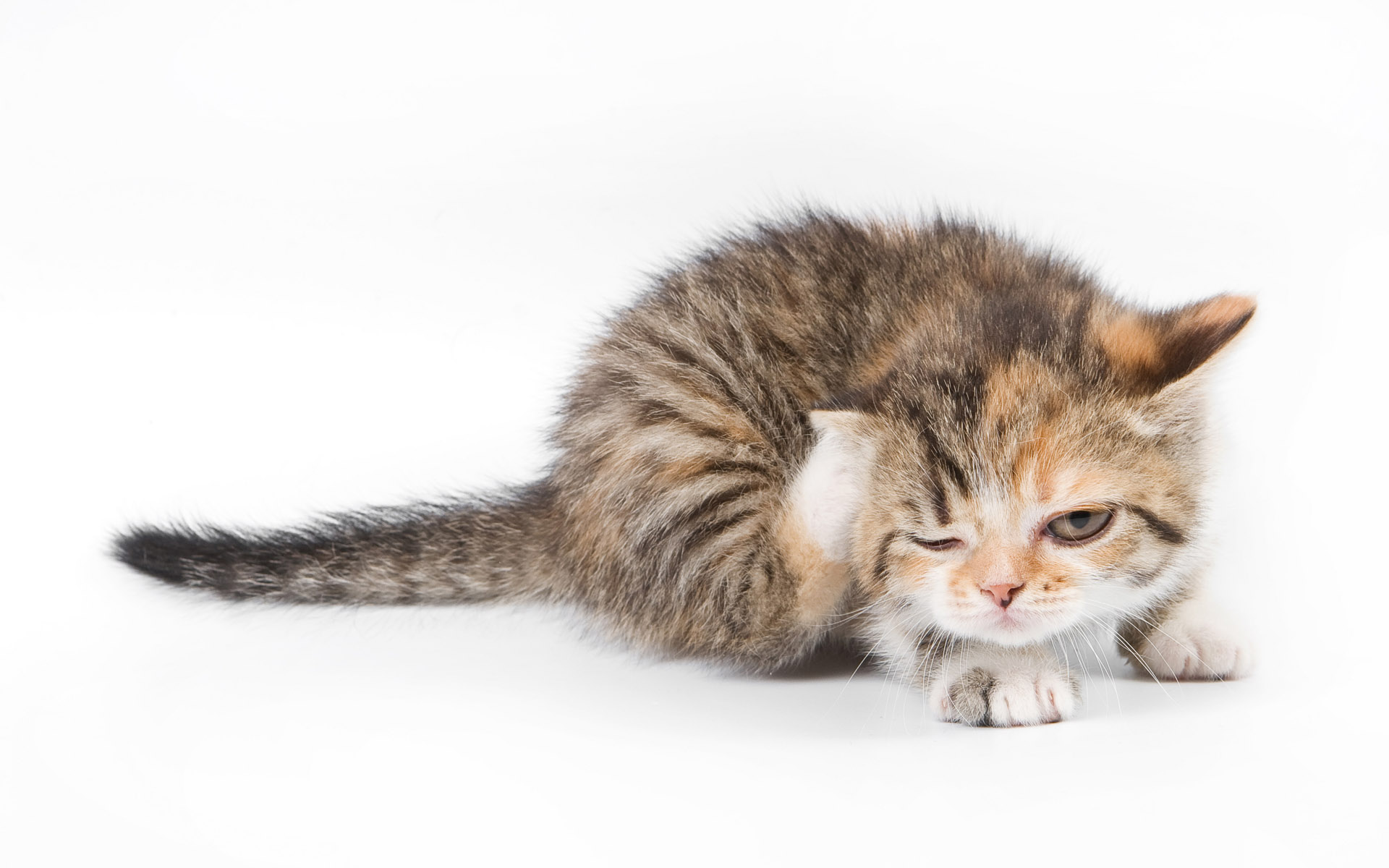 how to stop cats scratching wallpaper